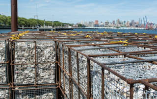 Oysters Saving Harbor