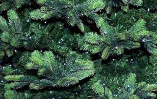 Recycle Christmas Trees